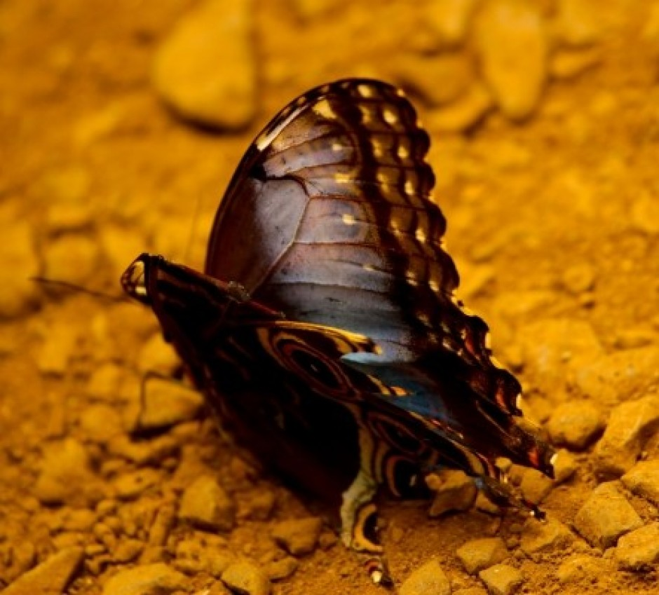 on the fear of death Death is not the greatest loss in life the greatest is what dies inside us while we live - buddha.